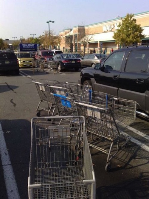 the-best-funny-pics-of-lazy-people-shopping carts