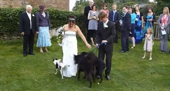wedding fails, funny wedding photos, funny wedding pics, funny wedding pictures, funny photos, funny pics, funny pictures, best funny pictures, funny vids, fails