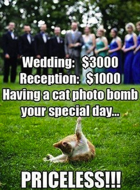 wedding fails, funny wedding photos, funny wedding pics, funny wedding pictures, funny photos, funny pics, funny pictures, best funny pictures, funny vids, fails