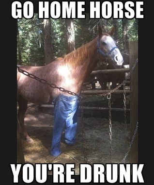 funny pics of go home youre drunk meme Horse really funny memes go home you're drunk