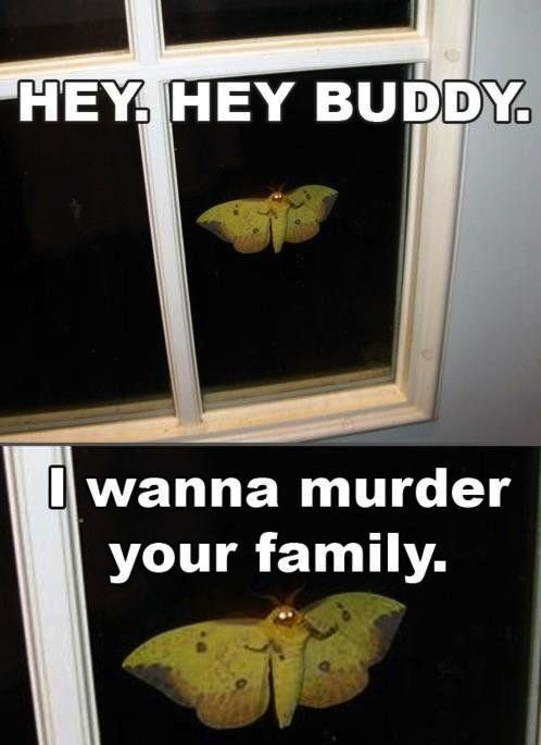 Really Funny Memes: I Will Murder Your Whole Family