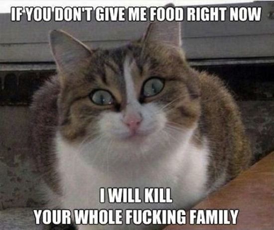 meme, memes, funny memes, funny meme, what is meme, define meme, funny pics, best funny pictures, funny photos, i will murder your whole family
