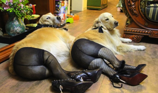 Image of: Gif Funny Dog Funny Animal Funny Animals Funny Vids Funny Ruin My Week Dogs In Pantyhose Are Enjoyably Disturbing