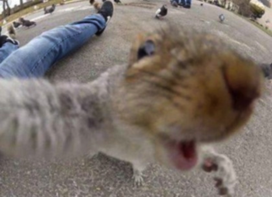 animal selfies, funny animals, funny animal photos, funny animal pictures, funny photos, funny pics, funny pictures