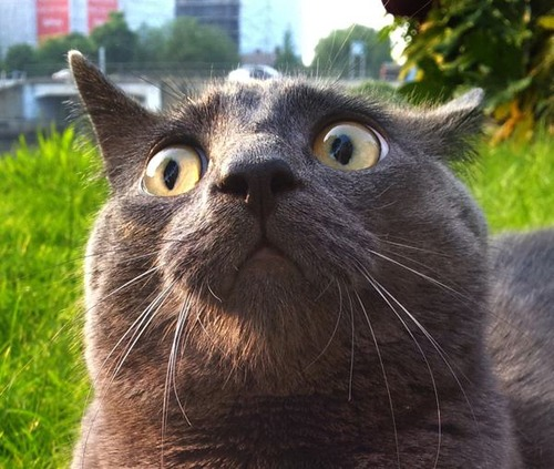 Random: Cats React To Being Outside For The First Time