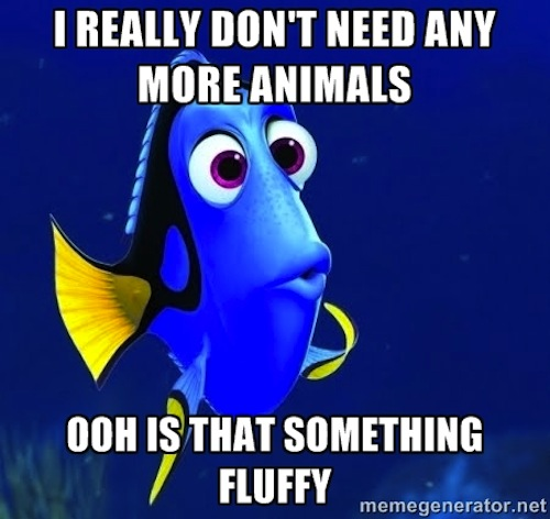 Very Funny Memes 2015 : Finding nemo birthday quotes just b use