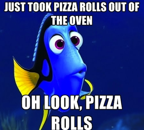 funny pics, funny photos, funny pictures, finding nemo, finding dory, forgetfull dory, funny vids, memes, meme, funny memes, popular memes, forgetful dory, forgetful dory meme, finding nemo meme, finding dory meme