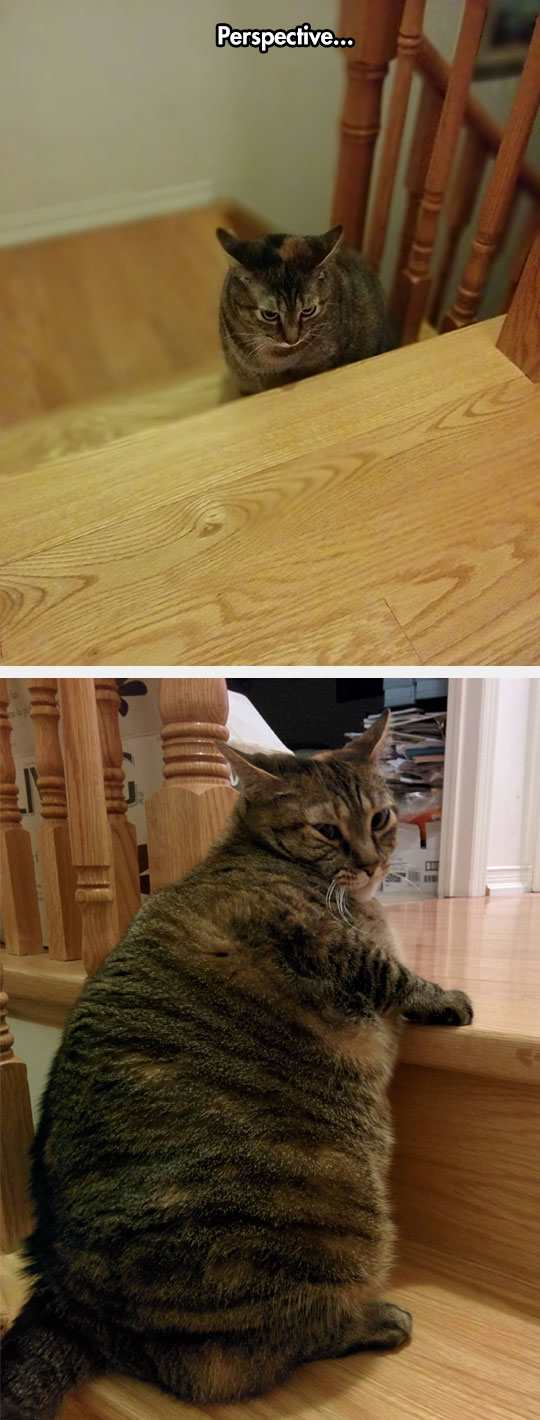 funny pictures, funny photos, funny pics, funny vids, funny cat, cat, funny cats, fat cat, funny