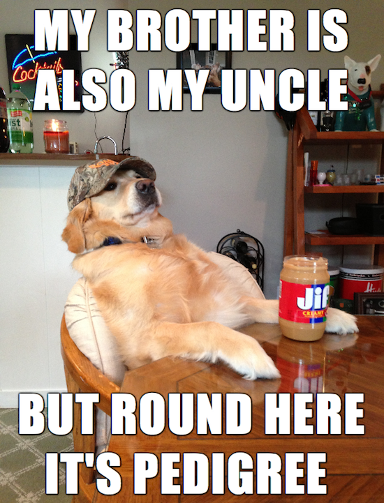 funny pics of redneck retriever meme funny memes 03 really funny memes redneck retriever ruin my week,Really Funny Memes
