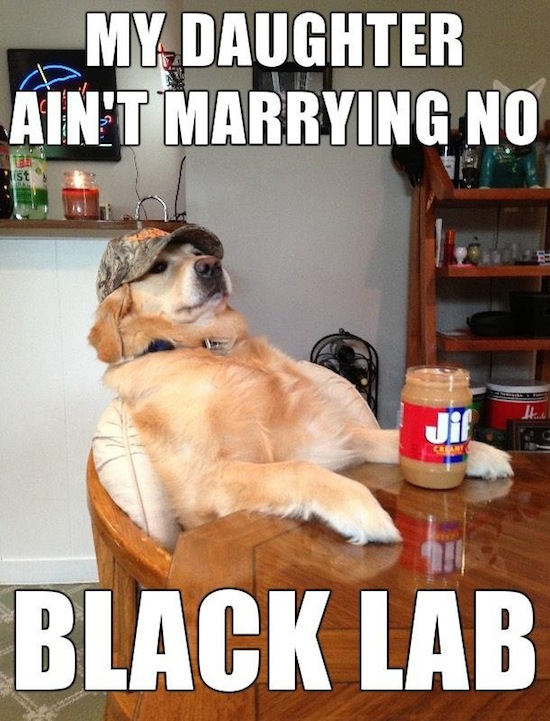 funny pictures, funny pics, funny vids, funny photos, funny memes, redneck retriever, redneck retriever meme, really funny memes, make meme, define meme, funniest meme, meme pictures