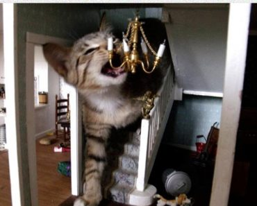best funny pictures, funny pics, funny photos, funny pictures, funny vids, the best funny pictures, really funny photos, funny photos of animals, cats, funny cats, cute cats, kittens, cute kittens, funny kittens, cats breaking into dollhouses