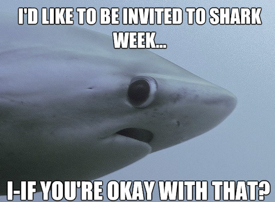 shy shark, shy shark meme, shy shark know your meme, shy shark meme maker, shark meme, sad shark meme, shark week meme, shark attack meme