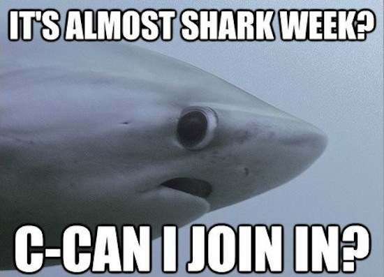 Really Funny Memes: The Shy Shark