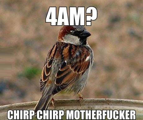 birds are assholes, birds are dicks, hate birds, angry birds, funny bird, funny birds, funny bird pics, funny bird pictures, funny bird photos, funny animal, funny animals, funny animal photos, funny animal pictures, funny pics, funny pic, funny photos, funny photo, best funny pictures, funny vids, funny vid, funny gifs, animated gifs, moving gifs, animal gifs, bird gifs, bird gif, funny bird gifs, funny bird gif