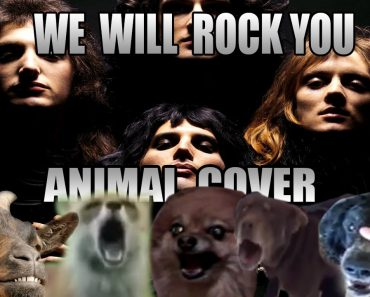 we will rock you animal, we will rock you animal cover, we will rock you animals cover, we will rock you animals version, we will rock you animal version, queen, we will rock you, queen we will rock you, funny vids, funny vid, funny videos, funny video, funny animal video, funny animal videos, cover, covers, cover song, cover songs