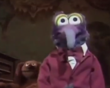 funny videos, funny video, funny vids, the muppets, mupets, gonzo, kermit, outkast, muppets cover ms jackson, ms jackson, outkast songs, muppet songs, cover songs, cover song, covers