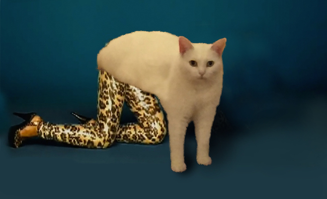 awkward cat, awkward sitting cat, awkward half-cat pose, half cat, funny cat, funny cats, cat photoshop, awkward cat photoshop, cat photoshopped, funny photoshop, funny photoshops, funny cat pictures, funny cat pics, funny cat photos, funny animals, funny animal, funny vid, funny vids