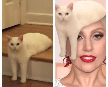 awkward cat, awkward sitting cat, awkward half-cat pose, half cat, funny cat, funny cats, cat photoshopp, cat photoshopped, funny photoshop, funny photoshops, funny cat pictures, funny cat pics, funny cat photos, funny animals, funny animal, funny vid, funny vids, lady gaga