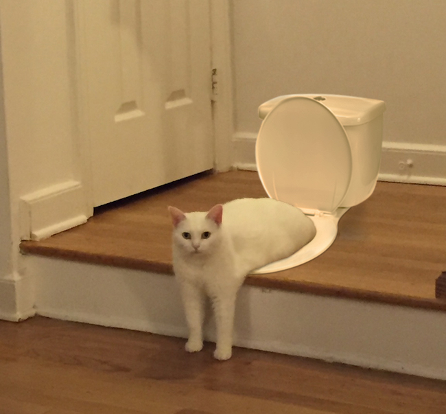 the internet had its way with a photo of a cat sitting awkwardly
