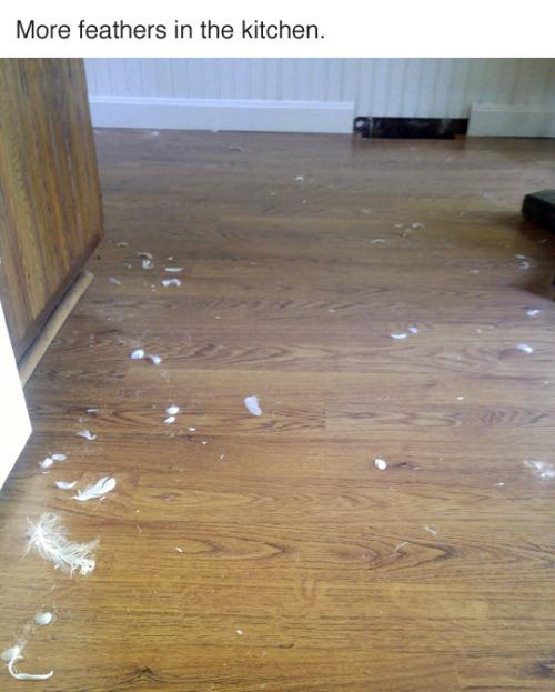 dog destroys house, dog destroy house, funny dog, funny dogs, who did it, whodunit, dog destroys couch, funny story, funny, who did it dogs, who made this mess, who made this mess dog, who did this mess guilty dog