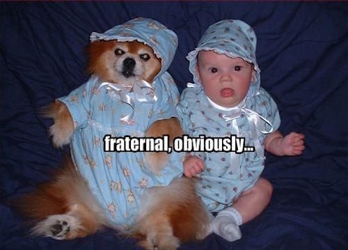 twins, fraternal twins, twins don't look alike, not identical twins, funny twins, funny fraternal twins, twins funny, twins meme, funny story, funny pic, funny pics, funny photo, funny photos, funny picture, funny pictures, funny dog, funny dogs, funny baby, funny babies