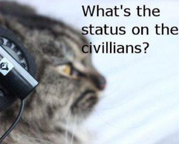 cats, cat, funny cat, funny cats, cat meme, cat memes, funny cat memes, meme, memes, cute cat memes, lolcat, animal memes, best memes, top memes