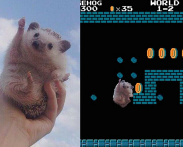 hedgehog photoshop, hedgehog photoshop battle, hedgehog photoshop battles, cute, cute hedgehog, enthusiastic hedgehog, photoshop, funny photoshop, photoshop battles, photoshop battles, best photoshop battles, hedgehog funny, sonic hedgehog, photoshop battle 9gag, memebase photoshop battle, photoshop battle meme, photoshop funny, funny photoshop, funny photoshop pictures, funny photoshop requests, funny photoshop ideas, funny photoshop pics, funny things to photoshop, photoshop funny pics, funny pictures to photoshop, photoshop funny pictures, funny photoshop photos, photoshop ideas funny, funny photoshop edits, funny photoshop images, funny pics to photoshop, funny photoshop effects, funny pictures photoshop, best funny photoshop, funny photos to photoshop, funny photoshop online, funny things to do in photoshop