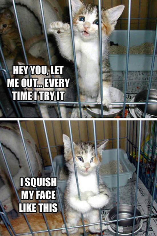best funny pictures, funny pics, funny photos, funny pictures, funny vids, the best funny pictures, really funny photos, funny photos of animals