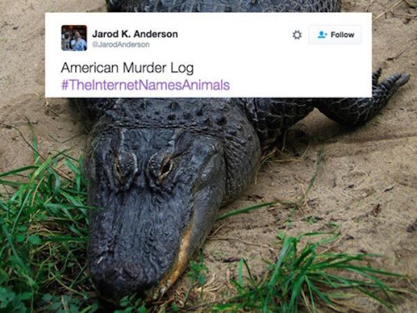 the internet names animals, internet names animals, twitter, tweets, tweet, funny tweets, funny tweets, funniest tweets, top tweets, best tweets, funny hashtag, funny hashtags, funniest hashtag, funny animal, funny animals, #theinternetnamesanimals, name animals hashatag, hashtag name animals