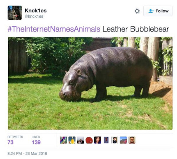 the internet names animals, internet names animals, twitter, tweets, tweet, funny tweets, funny tweets, funniest tweets, top tweets, best tweets, funny hashtag, funny hashtags, funniest hashtag, funny animal, funny animals, #theinternetnamesanimals, name animals hashatag, hashtag name animals