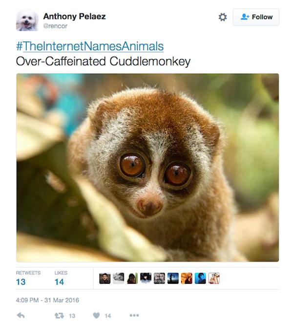 Top 20 World-Famous Animals - Listverse