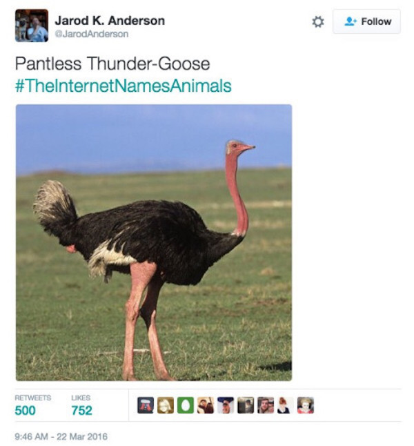 Everything Is As It Should Be When The Internet Names Animals