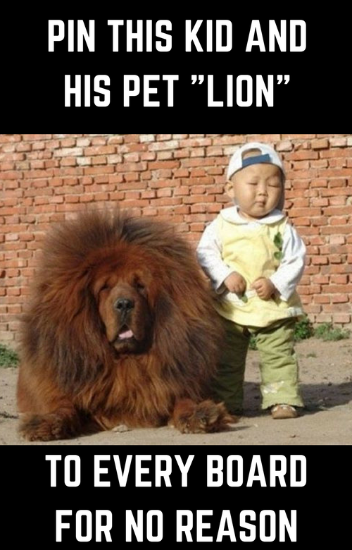 funny photo of a kid with a dog that looks like a lion