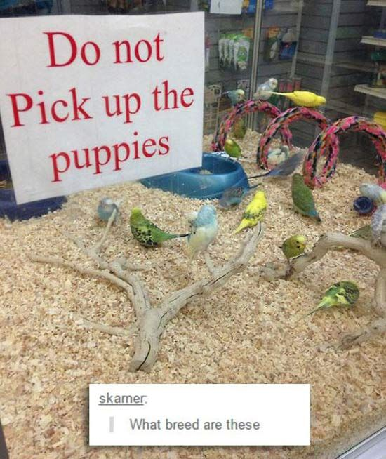 picture of sign that says do not pick up the puppies with birds in the cage