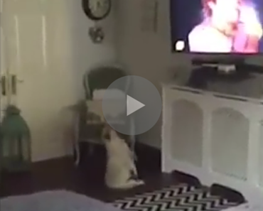 dog dancing to wham, dog dancing, dancing dog, dog wake me up before you go go, wham dog, wham! dog, dog wham!, funny dog, funny dogs, best dog video, best dog video ever, funny video, funny videos, funny vid, funny vids, animal video, animal videos, funny animal, funny animals, funny bulldog, bulldog funny