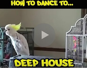 electronic dance music birds, electronic dance music bird, how to dance to electronic dance music, how to dance to edm, electronic dance music funny, funny electronic dance music, what is electronic dance music, what is edm, funny animals, funny animal, funny bird, funny birds, dancing birds, dancing bird, bird dancing, birds dancing, how to dance, how to, funny video, funny videos, funny vid, funny vids, funniest video evert, funniest bird ever, best bird, best birds