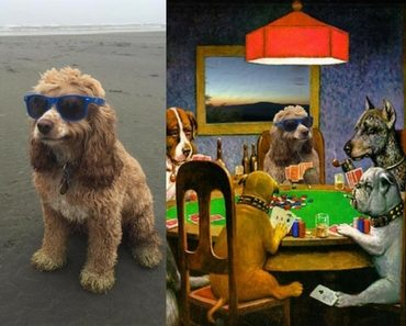 smug dog, smug dog on beach, smug dob on the beach, smug dog photoshop, smug dog photoshop battle, photoshop smug dog, photoshop battle smug dog, dog in glasses, dog wearing sunglasses, dog in sunglasses, dog wearing sunglasses, beach dog photoshop, beach dog, cool dog, dog photoshop, photoshop dog, photoshop, funny photoshop, photoshop battles, photoshop battles, best photoshop battles, photoshop battle 9gag, memebase photoshop battle, photoshop battle meme, photoshop funny, funny photoshop, funny photoshop pictures, funny photoshop requests, funny photoshop ideas, funny photoshop pics, funny things to photoshop, photoshop funny pics, funny pictures to photoshop, photoshop funny pictures, funny photoshop photos, photoshop ideas funny, funny photoshop edits, funny photoshop images, funny pics to photoshop, funny photoshop effects, funny pictures photoshop, best funny photoshop, funny photos to photoshop, funny photoshop online, funny things to do in photoshop