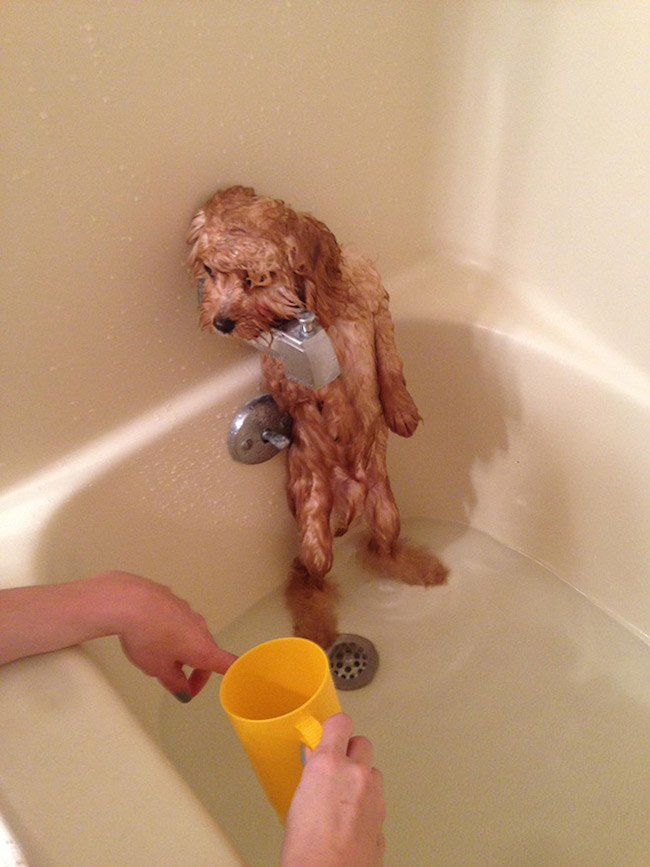 How To Give A Scared Dog A Bath