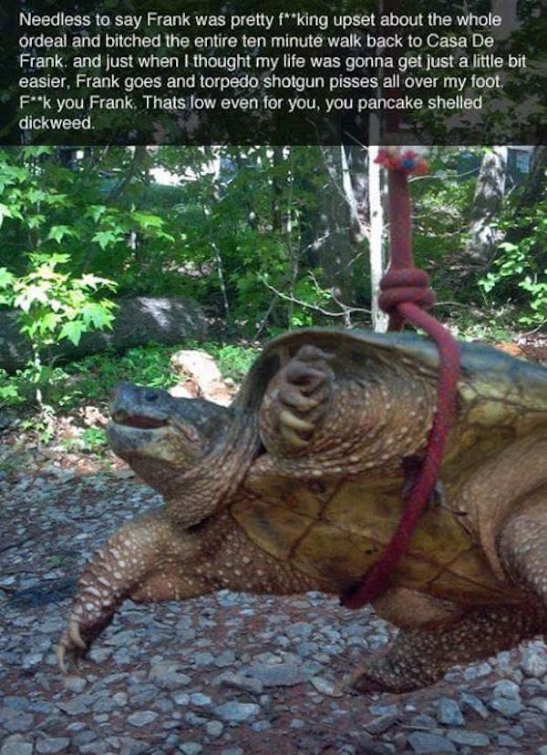frank the snapping turtle, frank the turtle, meet frank, the adventures of frank the snapping turtle, the epic tale of frank the snapping turtle, frank the snapping turtle reddit, frank the snapping turtle imgur, funny turtle, turtle funny, crank turtle, snapping turtle, random, weird, funny story, funny stories, funny animal, funny animals, turtle frank, snapping turtle frank, meet frank the turtle,