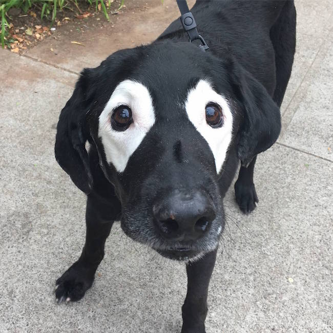 labrador with vitiligo photoshop, labrador with vitiligo battle, photoshop battle labrador with vitiligo, lab with vitiligo, vitligo lab, lab vitiligo, vitilio labrador, labrador vitiligo, dog vitiligo, vitiligo dog, dog photoshop, photoshop dog, labrador with vitiligo photos, labrador with vitiligo pics, labrador with vitiligo pictures, photoshop, funny photoshop, photoshop battles, photoshop battles, best photoshop battles, photoshop battle 9gag, memebase photoshop battle, photoshop battle meme, photoshop funny, funny photoshop, funny photoshop pictures, funny photoshop requests, funny photoshop ideas, funny photoshop pics, funny things to photoshop, photoshop funny pics, funny pictures to photoshop, photoshop funny pictures, funny photoshop photos, photoshop ideas funny, funny photoshop edits, funny photoshop images, funny pics to photoshop, funny photoshop effects, funny pictures photoshop, best funny photoshop, funny photos to photoshop, funny photoshop online, funny things to do in photoshop