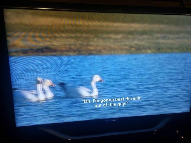 netflix glitch, nature show with aziz ansari subtitles, aziz ansari nature show, aziz ansari, subtitles aziz ansari, nature show aziz ansari, netflix funny, funny netflix, glitch, funny glitch, nature show subtitles, subtitle mistakes, mistake subtitles