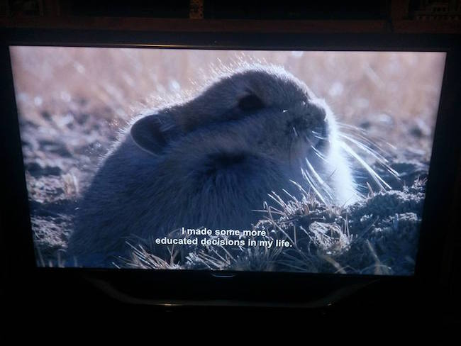 This BBC Nature Show Is Much Better With Aziz Ansari Subtitles