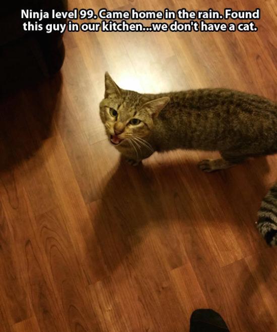 I M Like A Street Cat