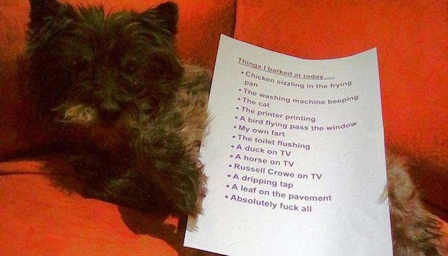 list of reasons dog was barking, dog barking list, barking dog list, barking dog reasons, reasons dog barking, reasons this dog was barking today, dog barking, why is dog barking, dog barking why, funny list, funny lists, funny note, funny notes, funny sign, funny signs, funny dog, funny dogs, dogs funny, dog funny, funny animals, funny animal, animals funny, animal funny,