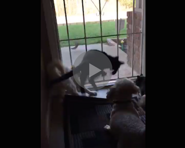dog scares cats, dog accidentally scares cats, dog scaring cats, dog vs cats, cats vs dog, dog versus cats, cats versus dogs, new dog scares cats, my dog scares my cat, dog cat cute, funny cat and dog videos, funny dog and cat fight video, funny dog and cat videos youtube, funny dog and cat vines, animal fail, animal fails, funny animal fails, epic animal fails, best animal fails, funny animal fails videos, animal epic fails, animal jumping fails, ultimate animal fails, cute animal fails, hilarious animal fails, animal fails 2015, animal fails 2014, animal fails 2016, animal fails 2017, animal fails 2018, animal fails 2019, animal fails vines, animal fails compilation 2016, animal fails compilation 2015, animal fails compilation 2017, animal fails clean, animal fails reddit, animal fails try not to laugh, animal fails buzzfeed, top 10 animal fails, cat fails, dog fails, try not to laugh, fail, fails, fail video, fail videos, fails video, fails videos, funny fails videos, epic fails videos, epic fails 2013, epic fails pictures, funny fails, best epic fails, funny epic fails, funny videos fails, fails funny, internet fails, funny epic fails videos, fails epic, epick fails, movie fails, website fails, epic funny fails, fails funny videos, funny videos and fails, funnies and fails, hilarious fails, funniest fails ever, ultimate fails, top fails, epic fails funny, the best epic fails, biggest fails, best internet fails, very funny fails, funny and fails, really funny fails, appropriate epic fails, best epic fails ever, funny funny fails, funniest fails in the world, worlds funniest epic fails, epic fails funny videos, funnyest fails, most funny fails, videos of epic fails, funny videos epic fails,best fails videos, funny vids, funny vid, funny videos, funny videos