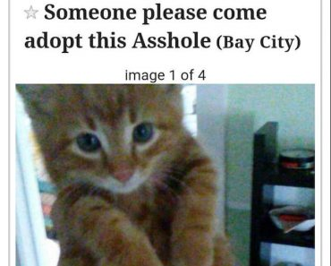 ditch kitty, hilarious kitten ad, funny kitten ad, asshole kitten, ditch kitty craigslist, craigslist ditch kitty, kitten asshole, asshole kitten, ad for asshole kitten, best ad ever, funny ad, funny ads, best ad
