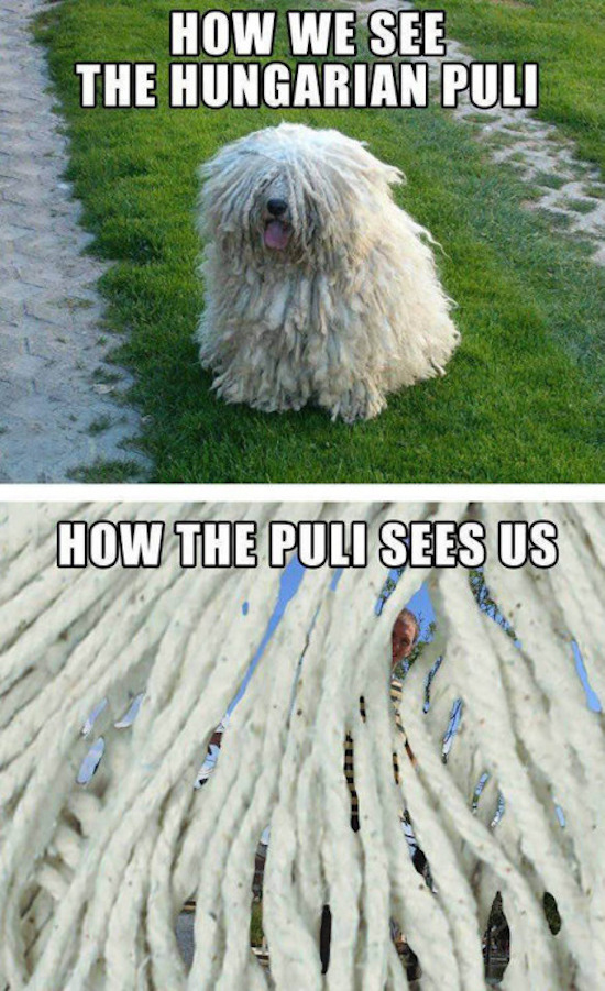 The Best Funny Pictures Of Today's Internet Pictures Funny