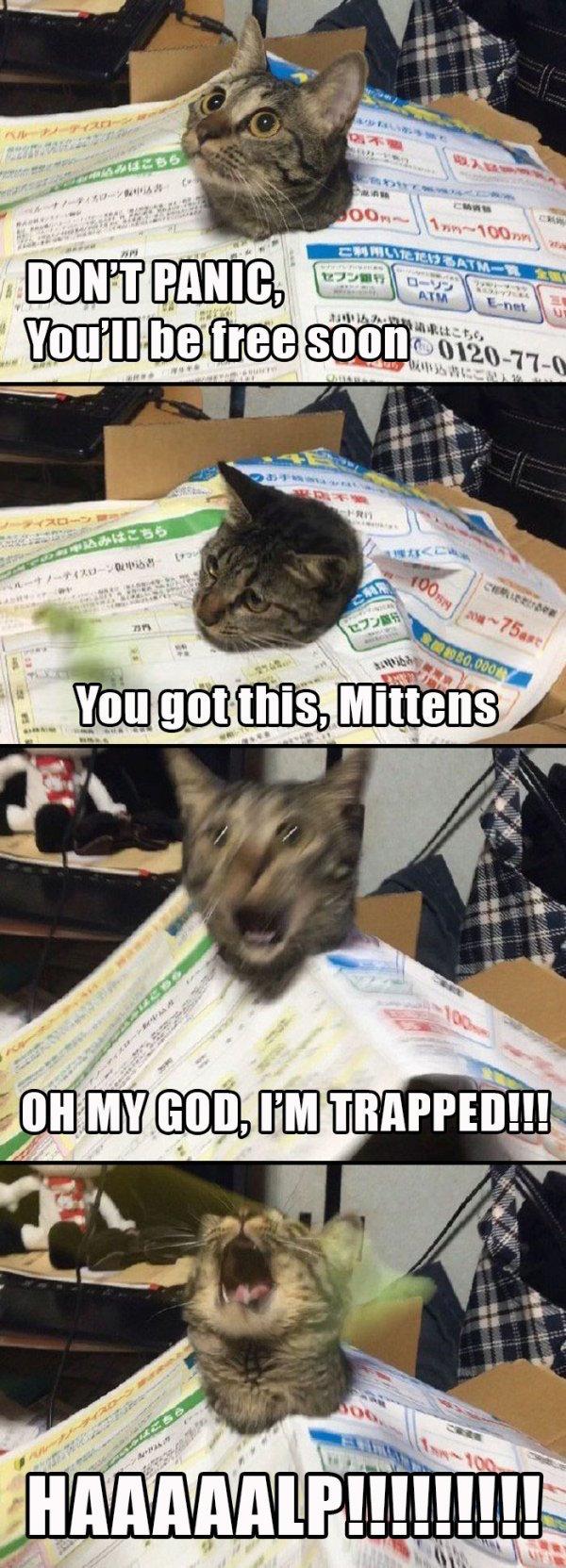 Cats Are Assholes Meme