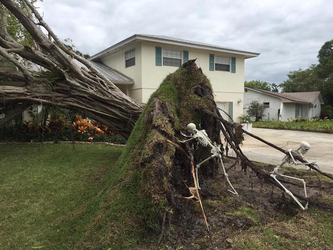 These People Improvised When Hurricane Matthew Ripped A Tree Out