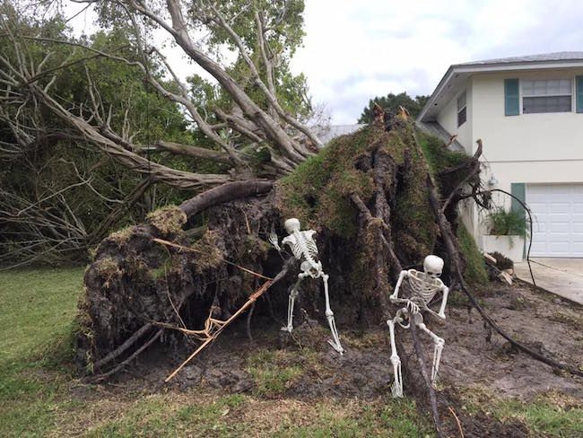 Halloween Skeleton Decorations.These People Improvised When Hurricane Matthew Ripped A Tree